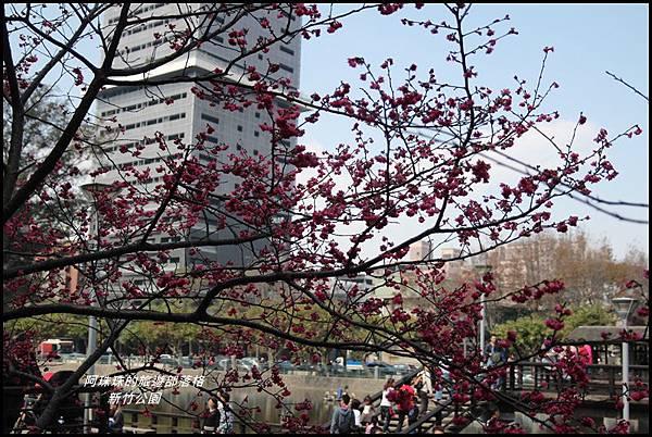 新竹公園19.JPG