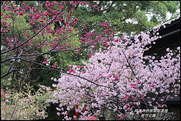 新竹公園20.JPG