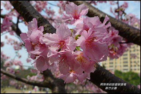新竹公園42.JPG