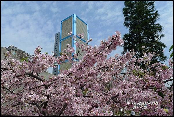 新竹公園45.JPG