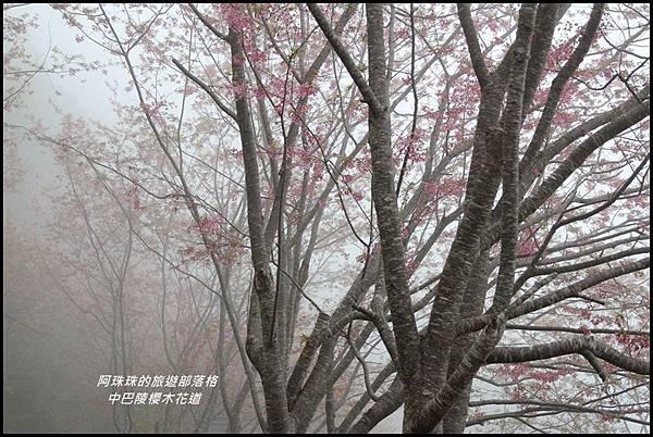 中巴陵櫻木花道6.JPG