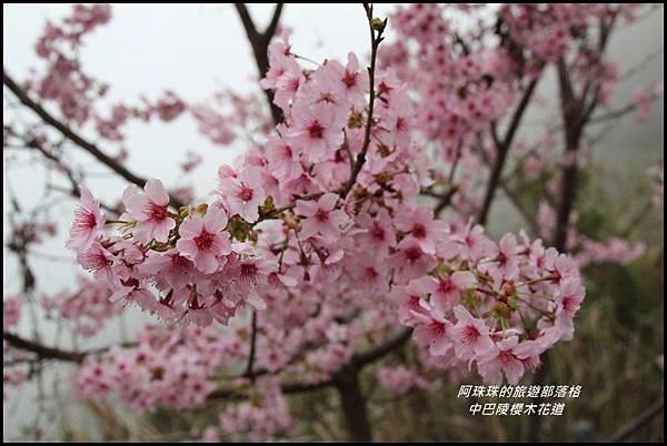中巴陵櫻木花道22.JPG