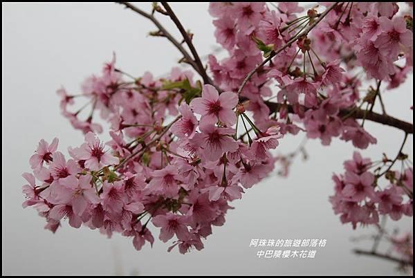 中巴陵櫻木花道23.JPG
