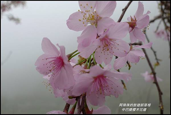 中巴陵櫻木花道41.JPG