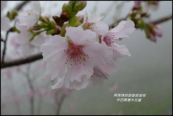 中巴陵櫻木花道40.JPG
