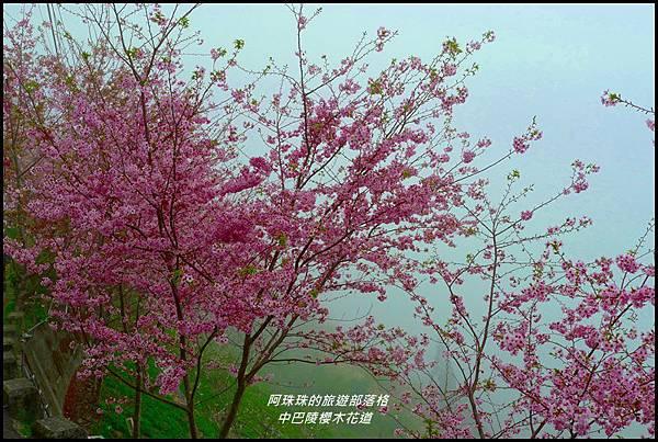 中巴陵櫻木花道43.JPG