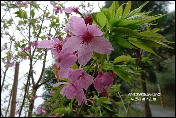 中巴陵櫻木花道44.JPG