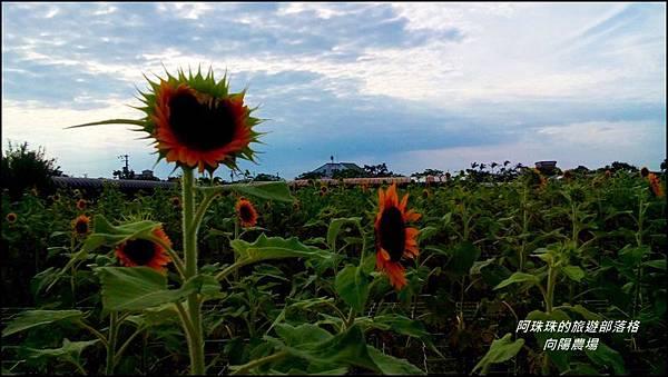 向陽農場5.jpg