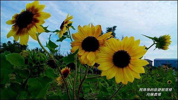 向陽農場6.jpg