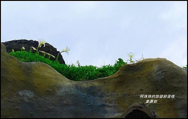 象鼻岩33.JPG