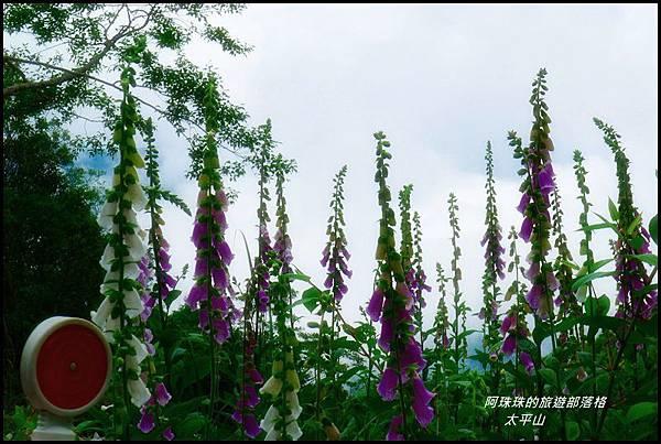 太平山33.JPG