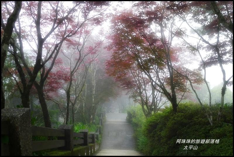 太平山45.JPG