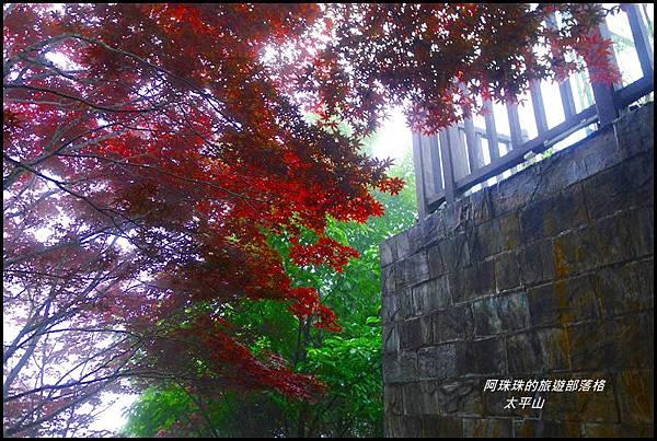 太平山50.JPG