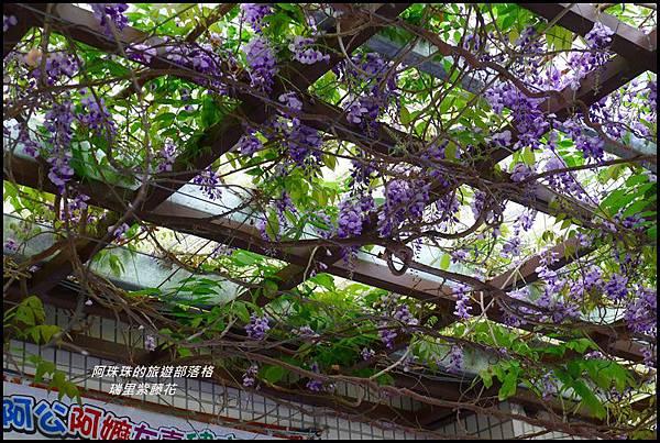 瑞里紫藤花2.JPG