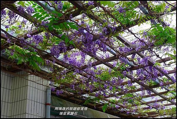 瑞里紫藤花3.JPG