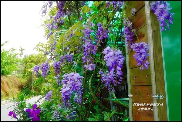 瑞里紫藤花11.JPG