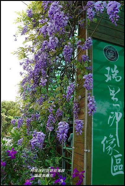 瑞里紫藤花28.JPG