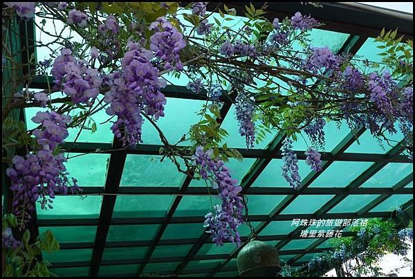 瑞里紫藤花31.JPG