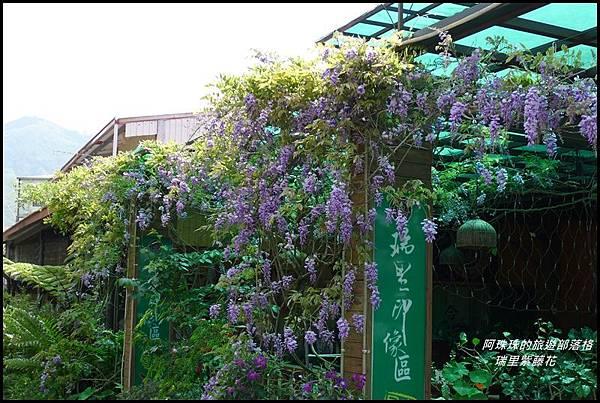 瑞里紫藤花33.JPG