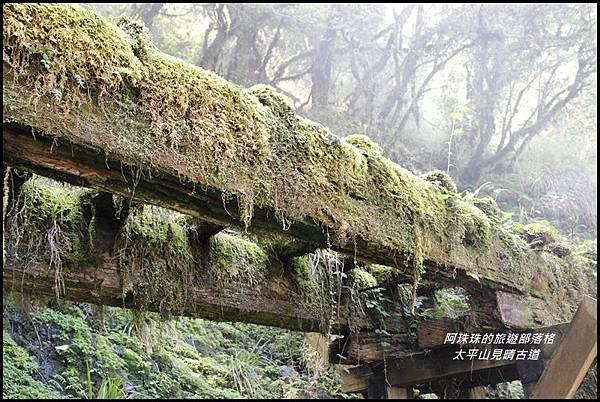 太平山見晴古道25.JPG