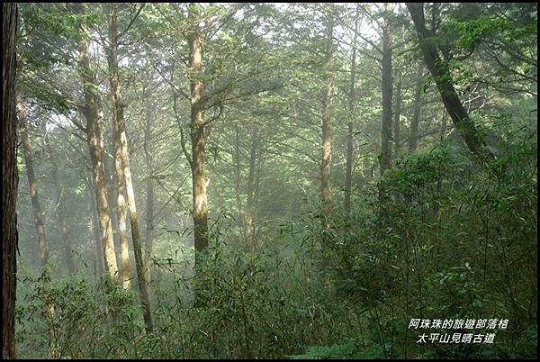 太平山見晴古道47.JPG