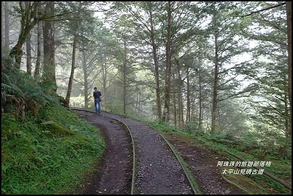 太平山見晴古道60.JPG