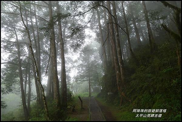 太平山見晴古道70.JPG