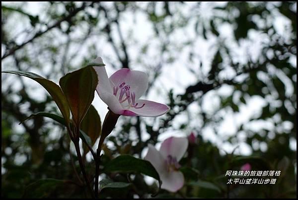 太平山望洋山步道8.JPG