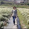銅鑼杭菊6.JPG