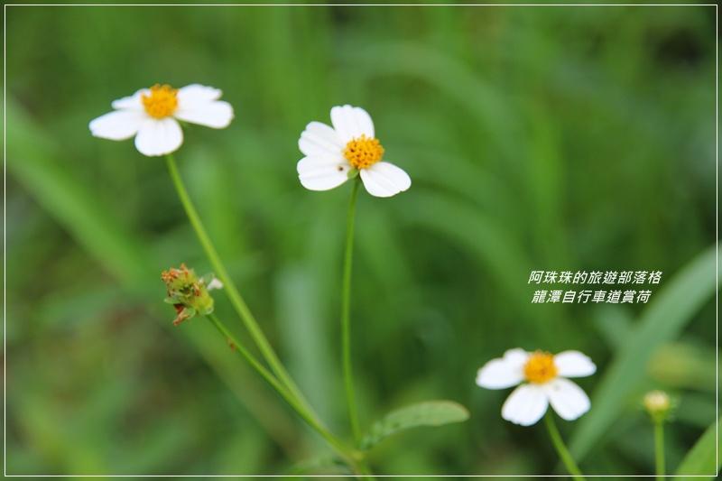 龍潭自行車道9.JPG