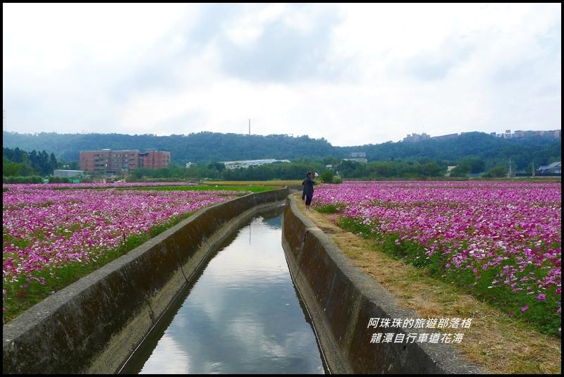 龍潭自行車道花海35.JPG