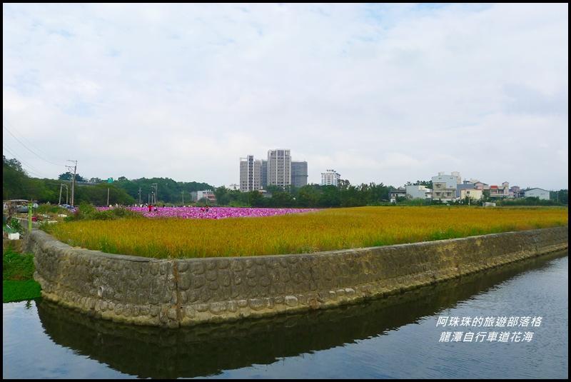龍潭自行車道花海39.JPG