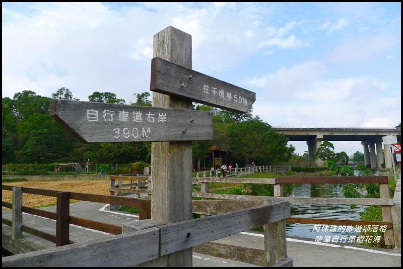 龍潭自行車道花海45.JPG
