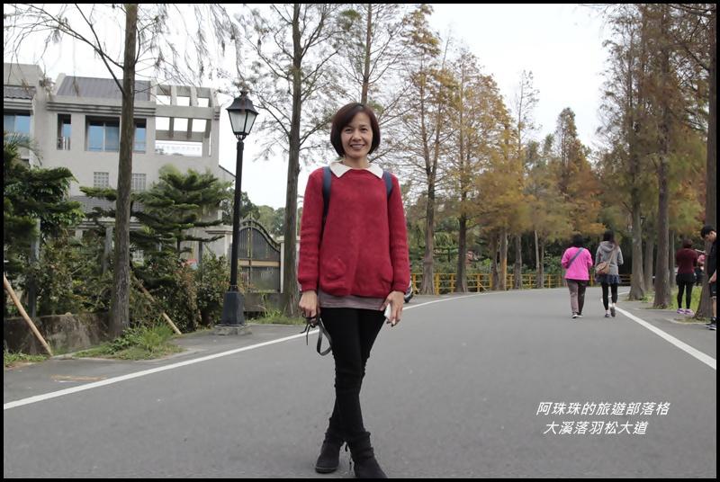 大溪落羽松大道5.JPG