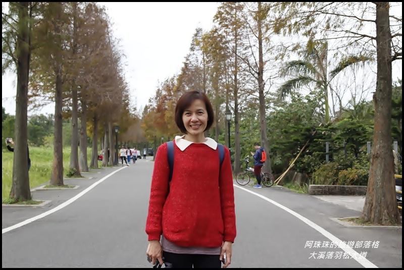 大溪落羽松大道14.JPG