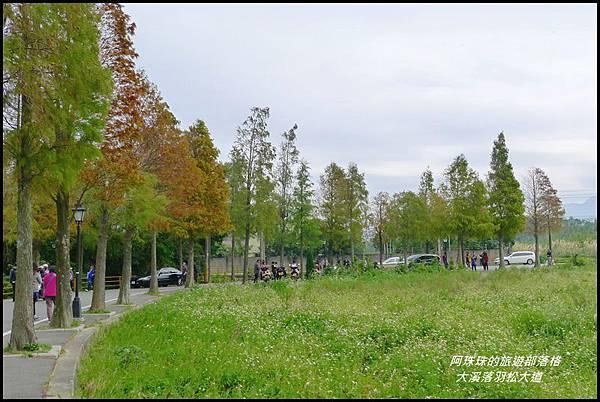 大溪落羽松大道21JPG.JPG