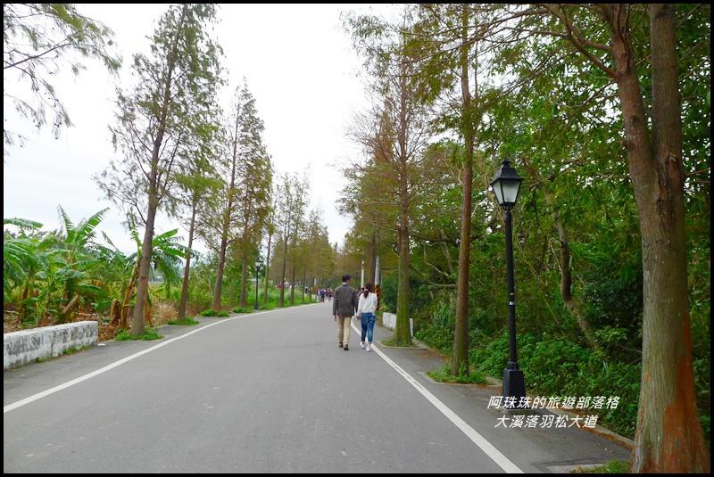 大溪落羽松大道27.JPG