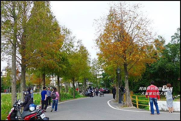 大溪落羽松大道34.JPG