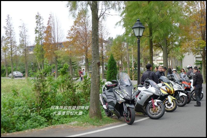大溪落羽松大道36.JPG