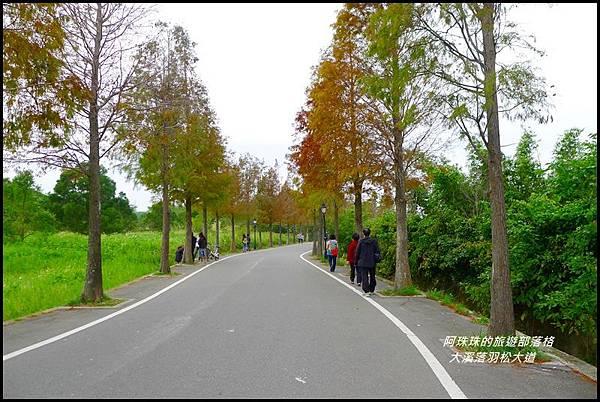 大溪落羽松大道37.JPG