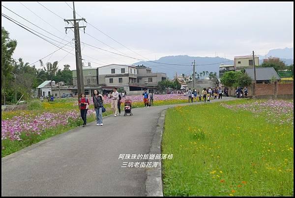 三坑老街花海23.JPG
