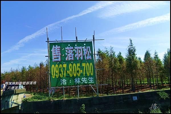 八德落羽松30.JPG