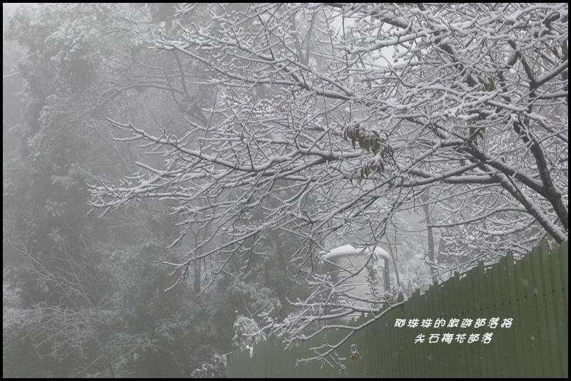 尖石梅花部落44.JPG