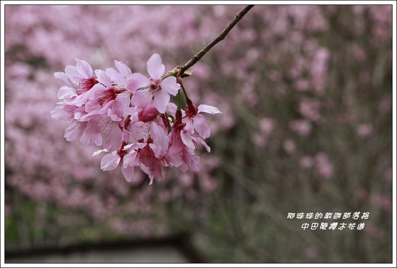 中巴陵櫻木花道15.JPG
