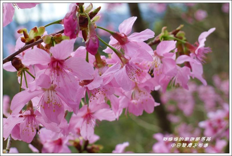 中巴陵櫻木花道18.JPG