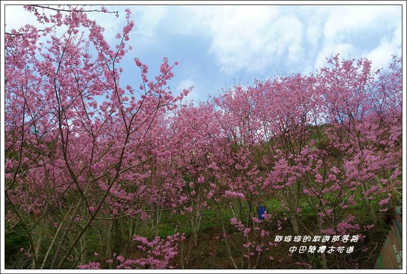 中巴陵櫻木花道24.JPG