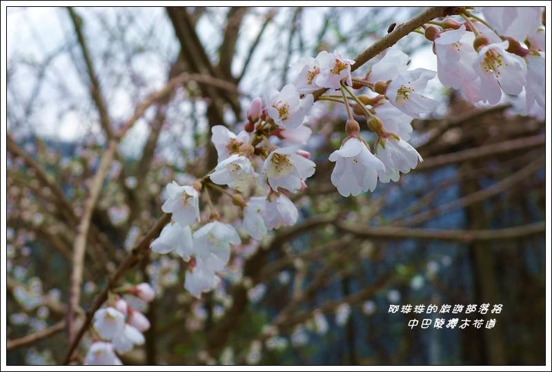 中巴陵櫻木花道34.JPG