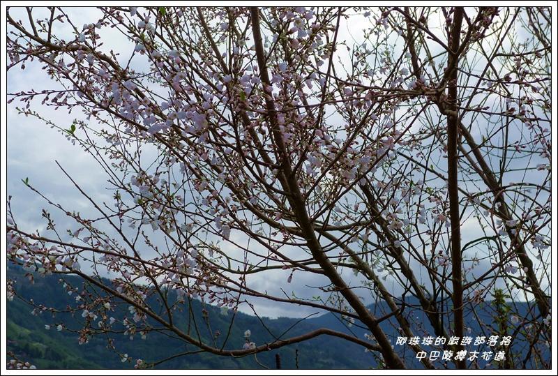 中巴陵櫻木花道36.JPG