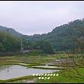 草嶺古道52.JPG