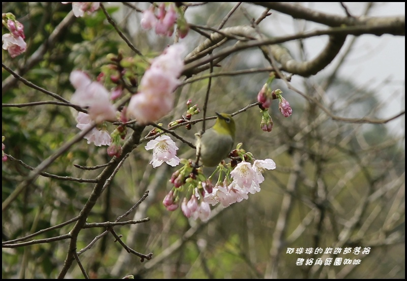 碧絡角庭園咖啡15.JPG